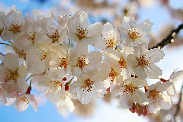Красота весны. Фото:xaxor.com