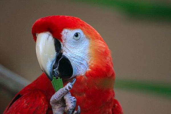 Попугаи. Фото:xaxor.com