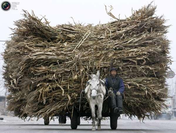 Телега с сухими стеблями в Гуе, северная китайская провинция Хэбэй. Китайская торговля с перерабатывающими предприятиями заметно замедлилась по сравнению со скоростью общей торговли. Фото:bigpicture.ru