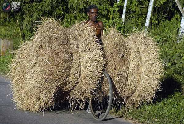 Крестьянин с тюками соломы на велосипеде в поселке Дханпур, в 80 км к югу от Агарталы, столицы индийского штата Трипура. Фото:bigpicture.ru