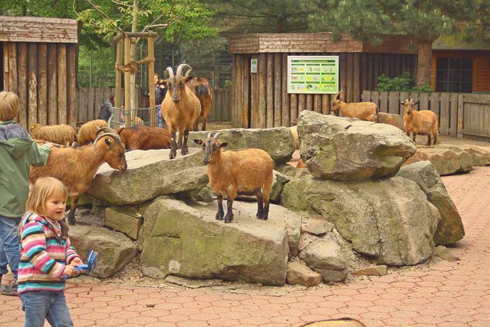Достопримечательности Рура: Парк животных в Штадгартене города Бохума. Фото: Сима Петрова/Великая Эпоха (The Epoch Times)