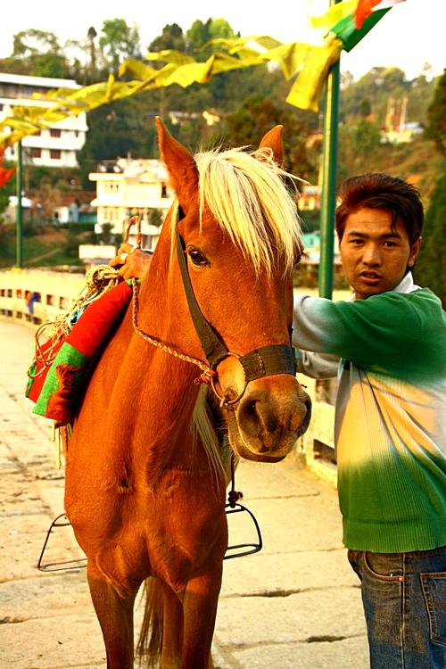 Местный житель предлагает покататься на лошади. Дарджилинг.Darjeeling. Фото: Сима Петрова/Великая Эпоха (The Epoch Times)