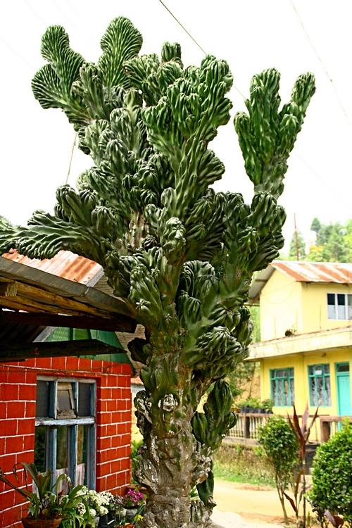 Удивительная растительность региона. Дарджилинг.Darjeeling. Фото: Сима Петрова/Великая Эпоха (The Epoch Times)