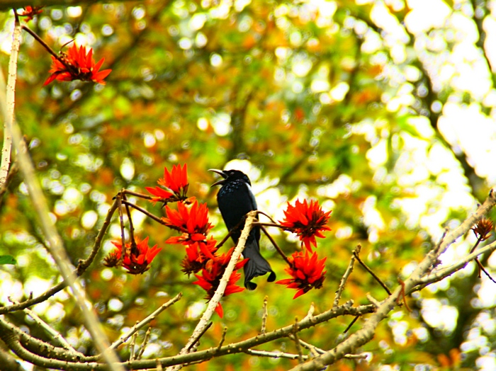 Удивительная птица. Дарджилинг.Darjeeling. Фото: Сима Петрова/Великая Эпоха (The Epoch Times)