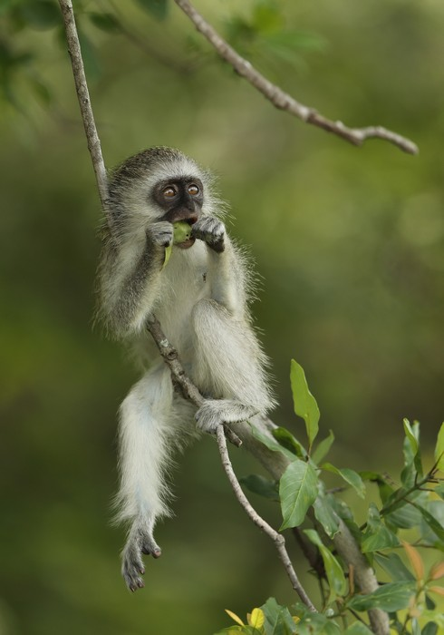 Животные в национальном парке Крюгер в ЮАР. Фото: Ian Walton/Getty Images