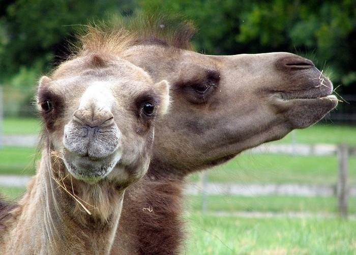 Забавные животные. Фото: pixabay.com