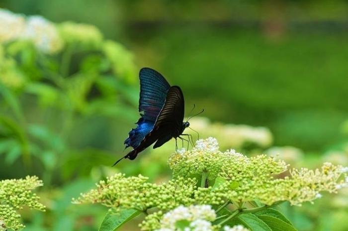 Любимые цветы и бабочки. Фото: Чжоу Яоцзун/Великая Эпоха (The Epoch Times)