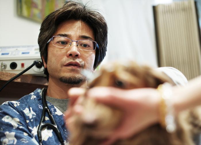 Миниатюрная такса Шоколадка проходит курс иглорефлексотерапии, чтобы вылечить поясничную межпозвоночную грыжу. Фото: Adam Pretty/Getty Images