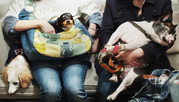 В приёмном покое собралась очередь на иглорефлексотерапию. Фото: Adam Pretty/Getty Images