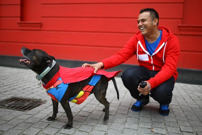 Ty, стаффордширский бультерьер, одет как Супермен с владельцем Энтони Фарранте на параде в Лондоне Фото: Jordan Mansfield/Getty Images