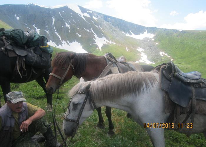 Лошади – верные спутники путешественников. Фото: Ирина Павловская