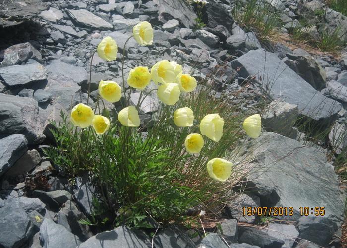 И на камнях растут маки. Фото: Ирина Павловская
