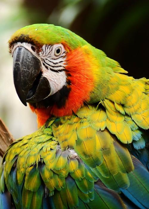 Фото попугаев смотреть