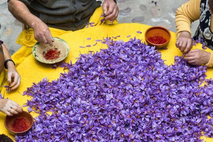 Шафран — высушенное рыльце фиолетового цветка шафрана. Фото: Shutterstock*