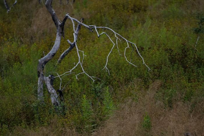 Умирают ли деревья? Фото: Хава Тор/Великая Эпоха (The Epoch Times)