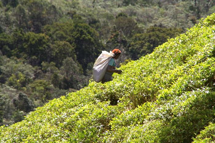 Шри-Ланка. Фото: Великая Эпоха (The Epoch Times)