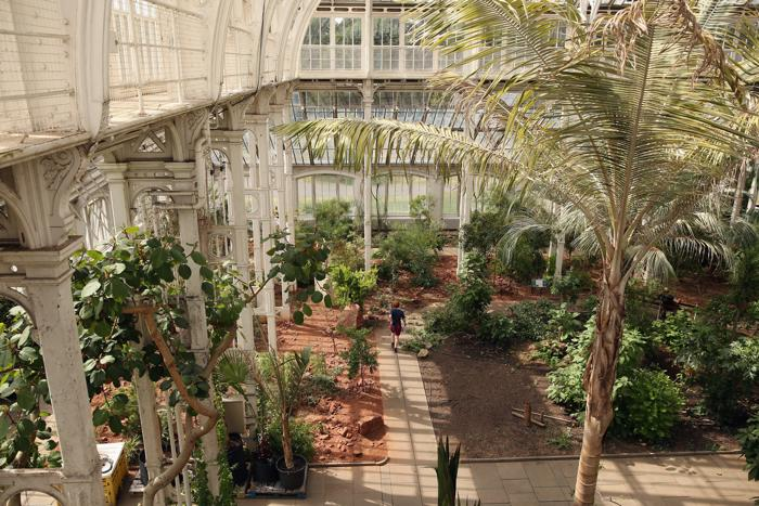 Специалисты крупнейшей в мире викторианской оранжереи начали перемещение экзотических растений в ходе подготовки к 5-летней реконструкции здания 5 августа 2013 года. Фото: Oli Scarff/Getty Images