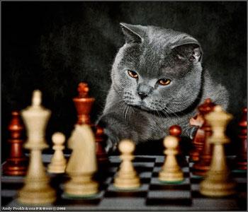 Всемирная шахматная  Олимпиада откроется сегодня в  Ханты-Мансийском автономном округе. Фото:Артура Пасечника