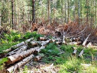 Житель КНР вырубил амурский лес почти на 3 миллиона рублей. Фото с crimerussia.livejournal.com