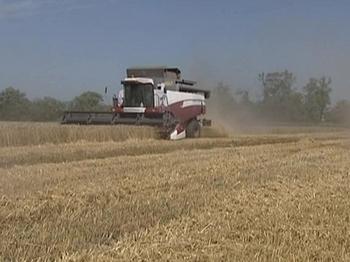 На Ставрополье собран рекордный урожай пшеницы. Фото с newsfiber.com