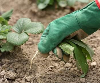 Экологи накормят горожан и защитят садоводов. Фото с timetolive.ru
