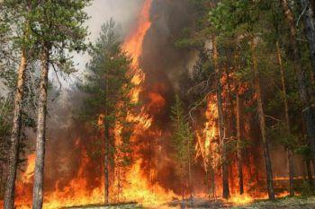 В  Удмуртии ущерб  от пожара и взрывов на военном складе составил 1 млрд рублей. Фото с nashinews.ru