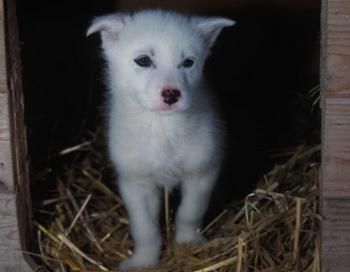 Приют для животных в Иванове. Фото: National Geographic/Getty Images