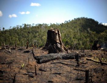 РЖД вырубает самшит в заповедной зоне Сочинского национального парка. Фото: ROBERTO SCHMIDT/Getty Images