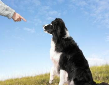 Подозрительных собак будут замерять.  Фото: Digital Zoo/Getty Images
