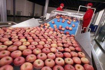 В Магадане вспышка кишечной инфекции вызвана фруктами из Китая. Фото:  China Photos/Getty Images