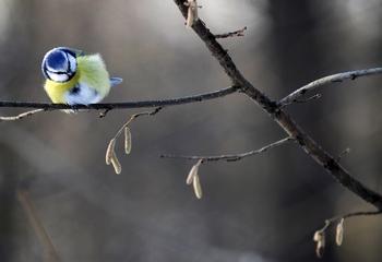 Очередная российская зима началась неожиданно. Фото:  NATALIA KOLESNIKOVA/AFP/Getty Images