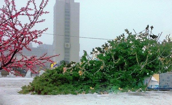 Упала самая дорогая елка в России. Фото: Юлия Гольченко. Великая Эпоха (The Epoch Times)