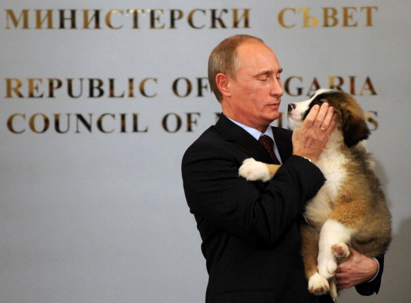 Каракачанская собака стала подарком российскому премьер-министру  Путину. Фото: NIKOLAY DOYCHINOV/AFP/Getty Images)