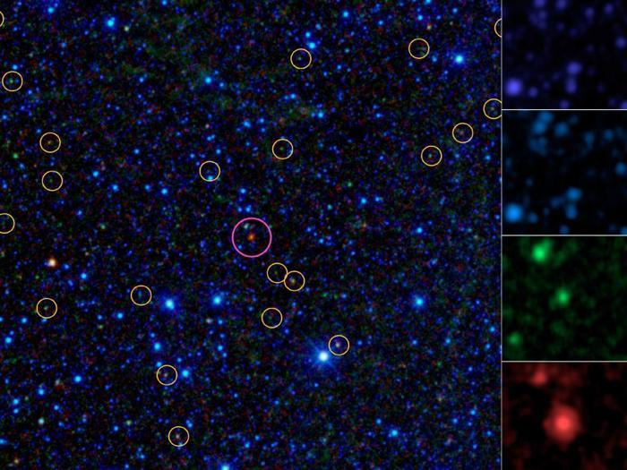 Розовый кружок на снимке инфракрасного космического телескопа WISE показывает так называемый «хот-дог», новый тип галактик, покрытых пылью. Жёлтые кружки показывают чёрные дыры. Фото: nasa.gov