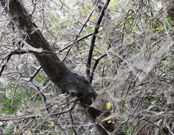 Эпидемия горностаевой моли в Иркутске. Фото: Нина Апёнова/Великая Эпоха (The Epoch Times)