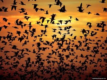 Озера Тагарское красноярского края стало прибежищем гибели 400 перелетных птиц. Фото с сайта fotki.yandex.ru