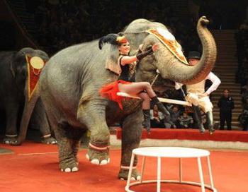 Цирковые слоны.  Фото:  omskinform.ru