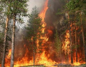 С пожарами на территории России идет усиленная борьба. Фото с сайта tumentoday.ru