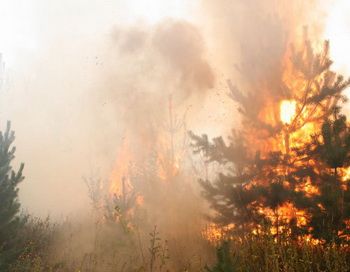 Тушение лесного пожара. Фото РИА Новости