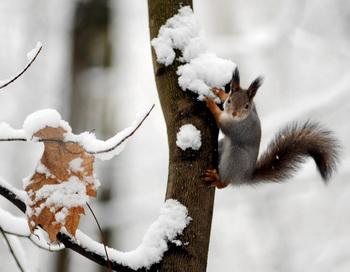 На Урал пришли сибирские морозы. Фото: NATALIA KOLESNIKOVA/AFP/Getty Images