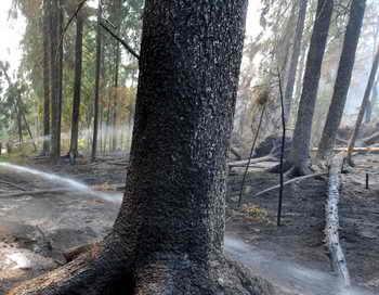 На восстановление подмосковных лесов уйдёт минимум 7 лет. Фото: VIKTOR DRACHEV/AFP/Getty Images