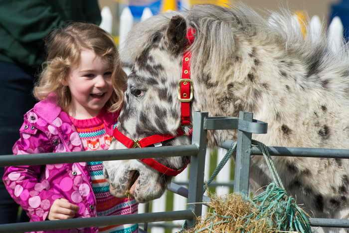 Детский контактный зоопарк скоро откроется в Иркутске. Посетители, в том числе и дети, смогут зайти в любой вольер и пообщаться с животными. Фото: Samir Hussein/Getty Images for Ascot