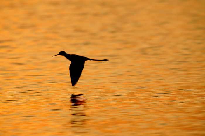 Экологи России за проект по сохранению бассейна реки Амур получили «зелёного Оскара». Фото: David McNew/Getty Images