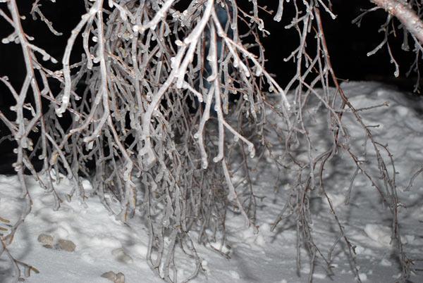 Ледяной дождь в Москве и Подмосковье превратился в толстую ледяную корку на всех поверхностях, в   том числе на ветках деревьев. Фото: Юлия Цигун/Великая Эпоха (The Epoch Times)