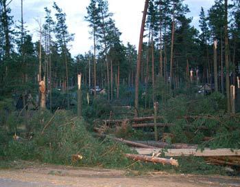 Ураган повалил деревья и вызвал отключение электричества в семи районах Ленинградской области. Фото: Ирина Оширова/Великая Эпоха