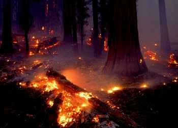 В России вспыхнула волна природных пожаров. Фото с news.moe-online.ru