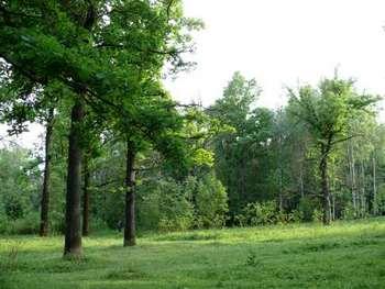 Убытки компании, строящей трассу через Химкинский лес, составили 4 миллиарда рублей. Фото с ecmo.ru