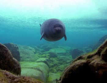 В Монте-Карло открылась фотоэкспозиция «Волшебный мир Байкала». Фото с сайта travel.ezine9.com