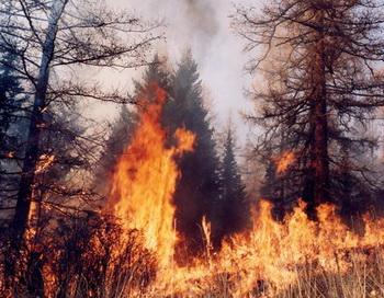 Лесные пожары в Сибири охватили более 4 тысяч га. Фото с сайта airbase.forest.ru