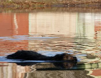 Паводковая ситуация. Фото РИА Новости